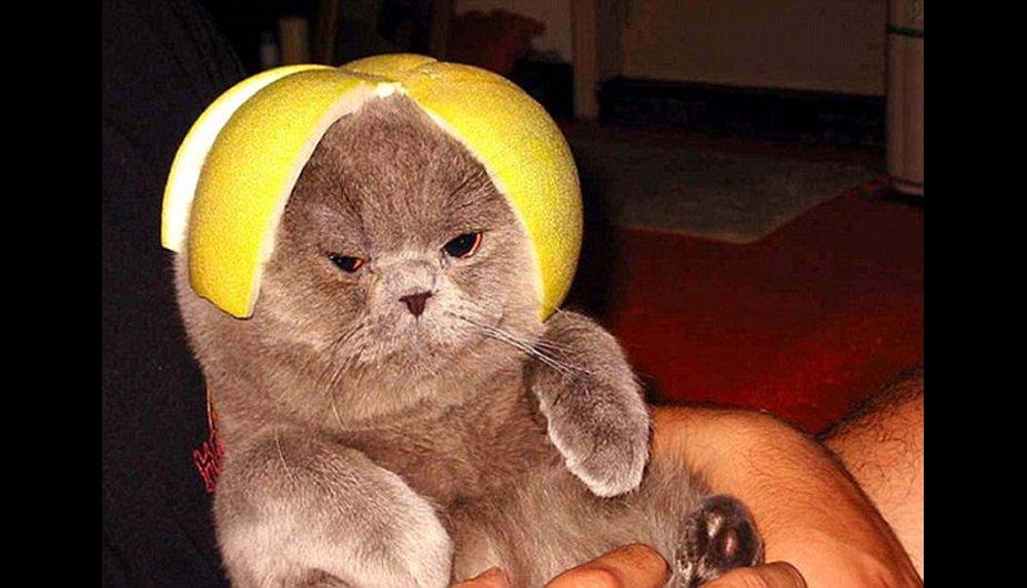Encontré gatos con casco y te los muestro