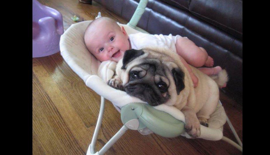 FOTOS: Convivir con perros evita que bebés sufran infecciones