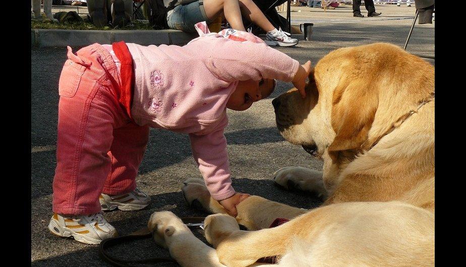 Atención mamis: Estas son las mejores razas de perros para niños (FOTOS)