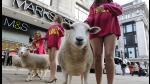Sexys modelos de Marks & Spencer pasean por Londres con ovejas (FOTOS) - Noticias de lana marks